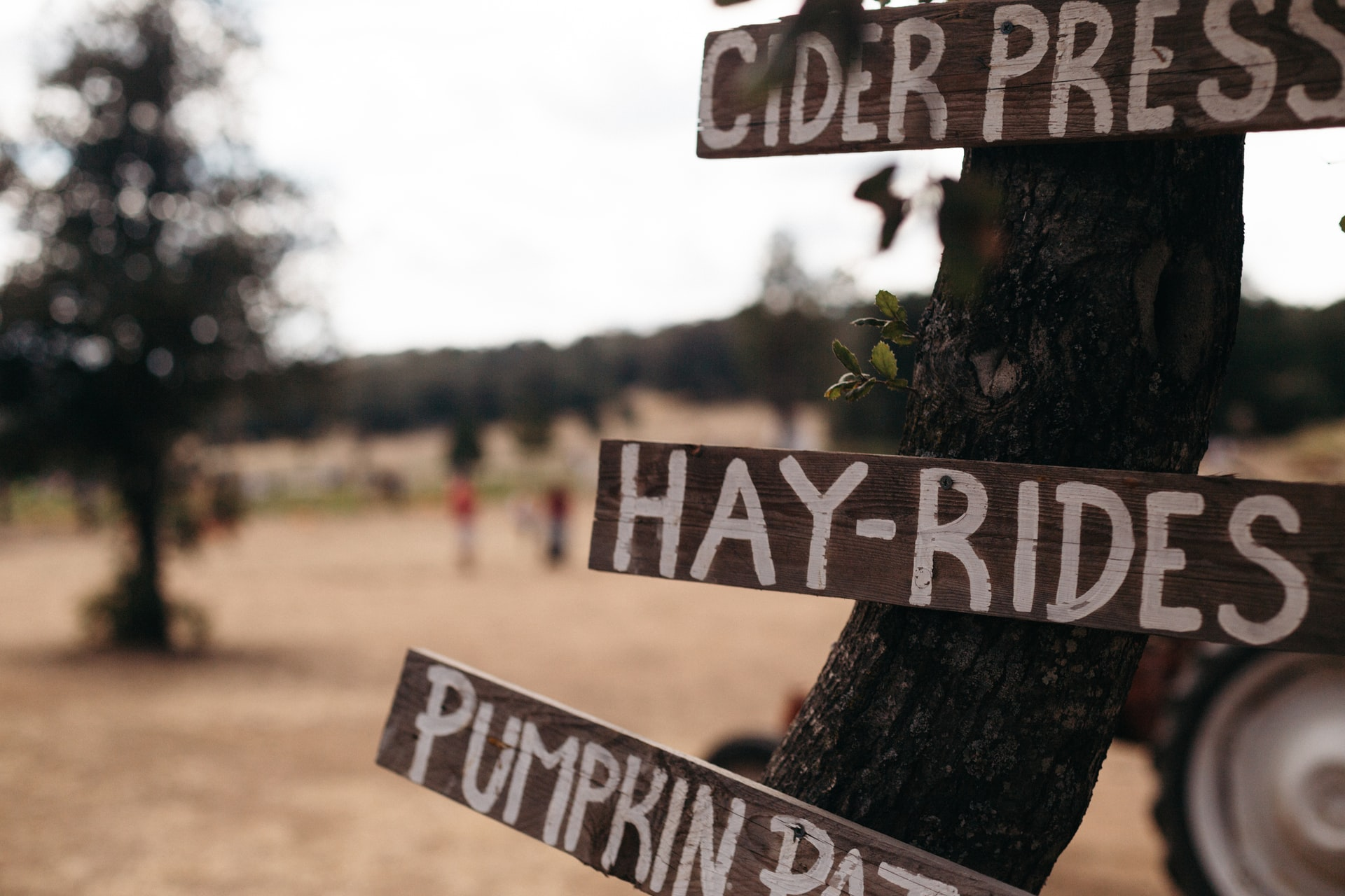 Fall Festivities Await at Lohr's Orchard, Not Far From Your Apartment in Aberdeen