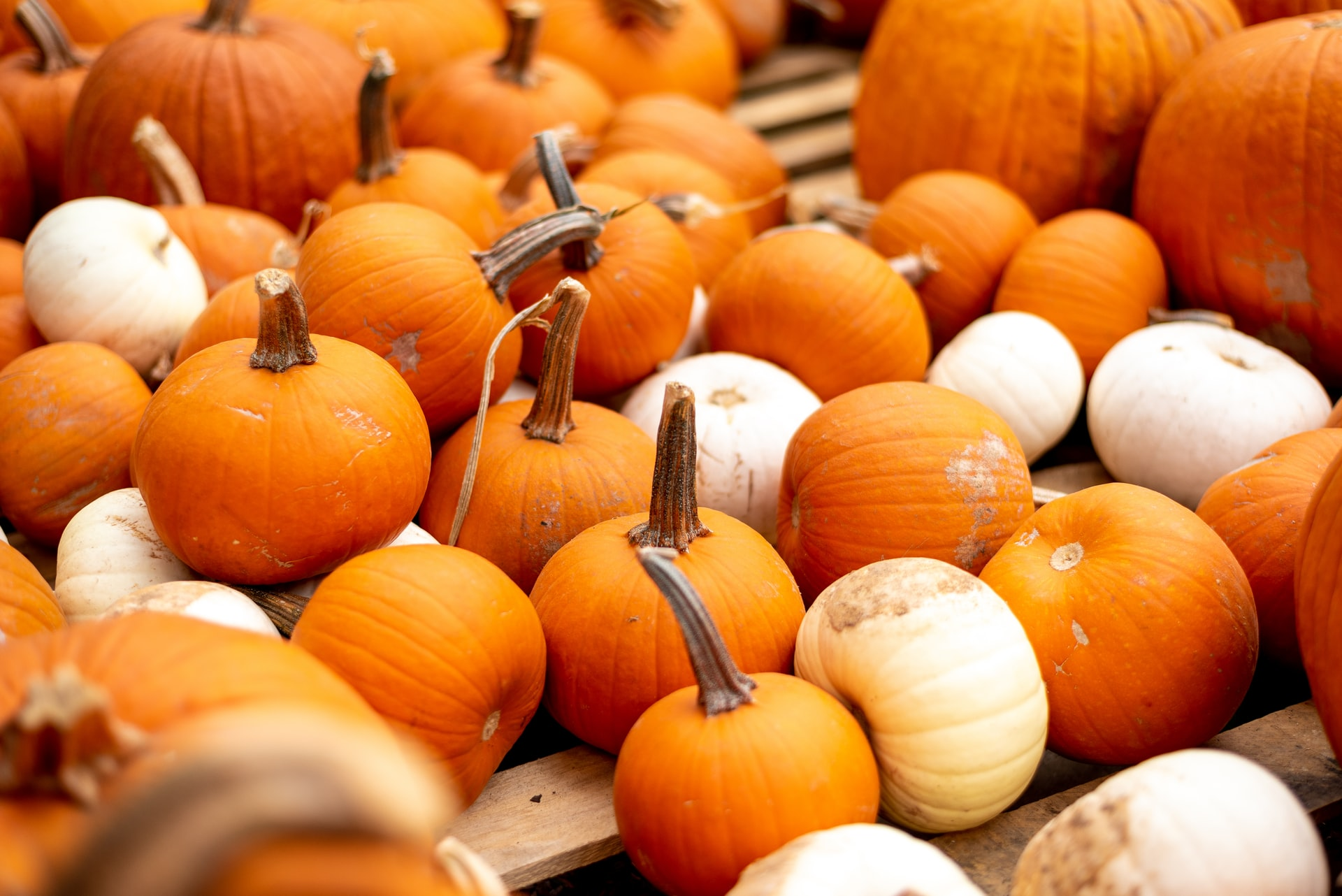 Clever No-Carve Ways to Decorate a Pumpkin at Your Aberdeen Apartment