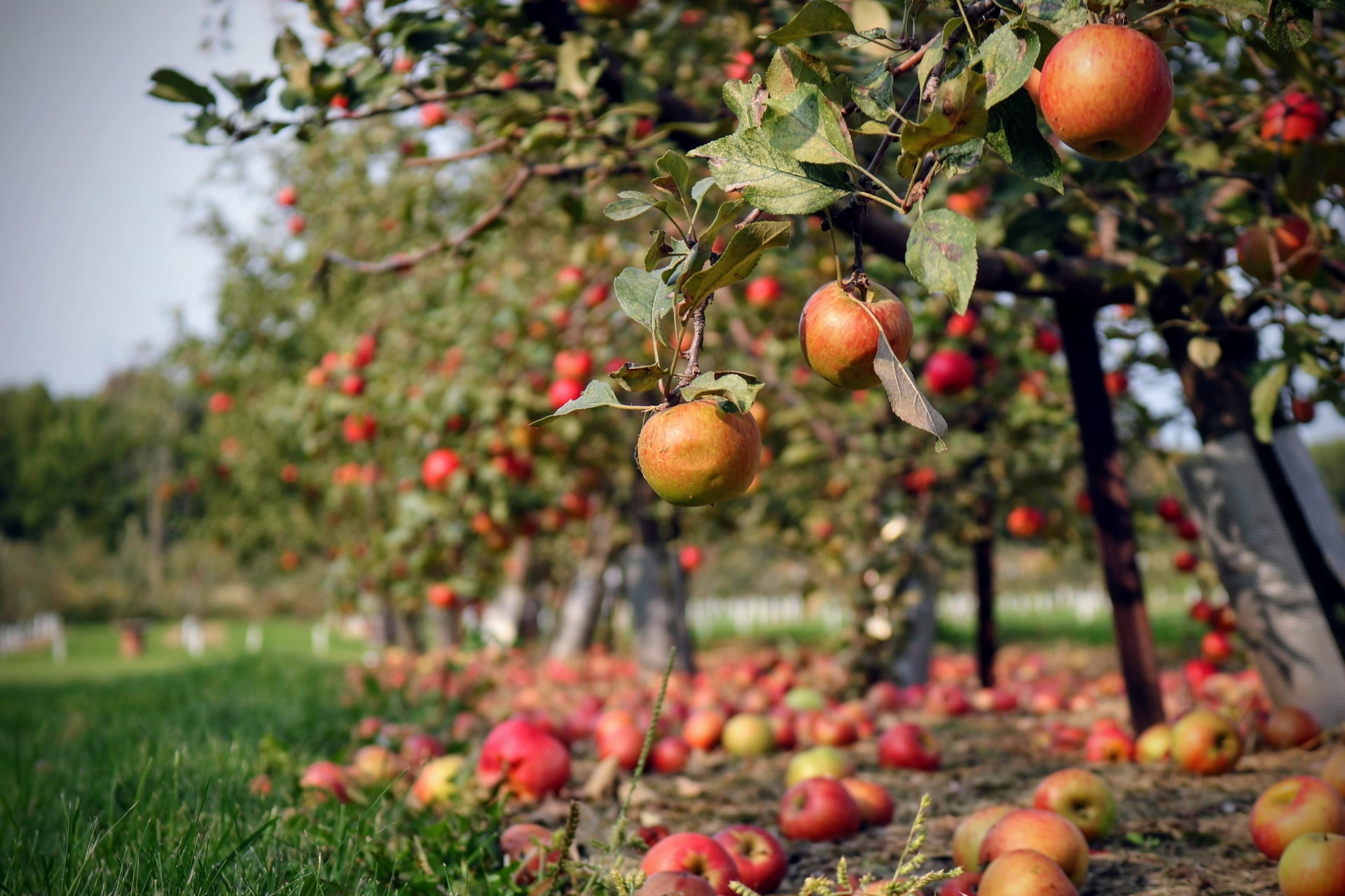 Lohr's Orchard: A Fall Tradition Returns Near Your Apartment in Aberdeen
